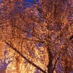 Magiczne drzewa - Szwajcaria Bałtowska